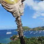 Zátoka ostrova Les Saintes